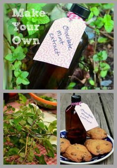 How to make your own chocolate mint extract.