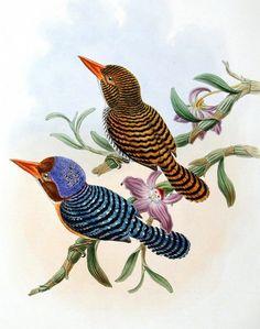 vintage+bird+illustration+03.jpg 1,000×1,268 pixels