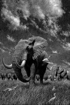 Elephant B&W copia