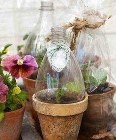 récup bouteilles plastique pour cloches de jardin