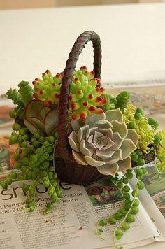 Korb mit #Sukkulenten #Garten #Wüstenpflanzen ♥ stylefruits Inspiration ♥