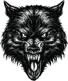 Find Hand Drawn Wolf Linework Vector stock images in HD and millions of other royalty-free stock photos, illustrations and vectors in the Shutterstock collection. Wolf Face Drawing, Wolf Face Tattoo, Wolf Tattoos Men, Wolf Illustration, Wolf Tattoo Design, Wolf Angry, Arte Teen Wolf, Tier Wolf, Werewolf Art