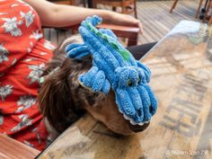 📸🐶 Out to lunch with Pepper Long Haired Dachshund, Out To Lunch, Dog Photos, Stuffed Peppers, Long Hair Styles, Dogs, Stuffed Pepper, Long Hairstyle, Pet Dogs
