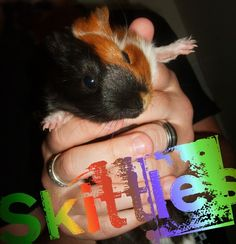 Skittles Jeepers Creepers, Animals, Animales, Animaux, Animais, Animal