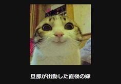 大喜利 猫19