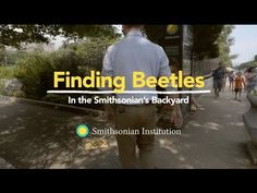 Finding Beetles in the Smithsonian's Backyard | Dan Babbit, Manager at the Insect Zoo and Live Butterfly Pavilion at Smithsonian's National Museum of Natural History, takes us to the museum's butterfly habitat garden located in downtown Washington D.C. As we search for beetles with Dan, he proves that we don't have to travel far to find amazing insects.