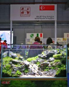 Aquarium Aquascape, Aquarium Fish Tank, Aquascaping, Aquarium Design, Aquarium Ideas, Stone Mountain, Scp, Freshwater Fish, Layout Inspiration