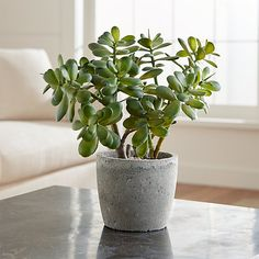 Wonderful Cool Tips: Artificial Plants Outdoor Decor artificial flowers table.Artificial Flowers How To Make artificial plants indoor target. Small Artificial Plants, Artificial Plant Wall, Artificial Flowers, Small Indoor Plants, Artificial Succulents, Planting Succulents, Planting Flowers, Succulent Plants, Potted Plants