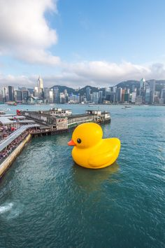 Rubber Duck @ Hong Kong by Mike Yeung on 500px