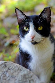 Black and White Cat in Green Forest - What more to say other than we just LOVE cool stuff!