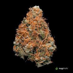 Sour Jedi Cannabis Strain