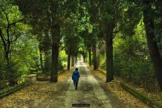 autunno by Massimiliano Amadori on 500px