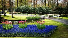 One of the most impressive Dutch experience #Keukenhof  #tulips #netherlands #onemonthago #experience #flowers #flowersart by causliva