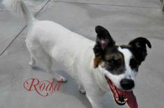 Rodd is a 2yr old Collie mix who would love to find his forever home!  You can meet him at the Hamilton Burlington SPCA www.hbspca.com