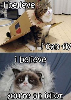 Check LoL Pictures of Grumpy Cat-Funny Shots! - Check LoL Pictures of Grumpy Cat-Funny Shots! Grumpy kitty-That face! Funny Photos Grumpy cat has become more than just a sad or annoyed cat that we laugh at… Cute Animal Memes, Funny Animal Quotes, Animal Jokes, Cute Funny Animals, Cute Baby Animals, Funny Cute, Cute Cats, Funny Sayings, Super Funny