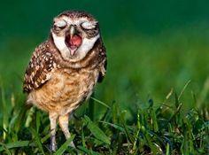yawning animals - Google Search