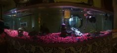 our fish tank