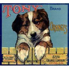 Azusa Tony Puppy Dog Orange Citrus Fruit Crate Label Art Print