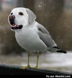 Image of: Dog Training Bird Dogs Are Fly The Commercial Appeal 15 Best Bird Dog Images Funny Animals Funny Animal Humorous Animals