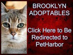 Brooklyn Urgent Shelter Cats_Please watch all Urgent Shelter Cats !