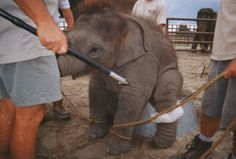 Next Time You Think The #Circus Is Cool, Just Look For #Bullhooks. It Won't Seem So Cool Anymore.