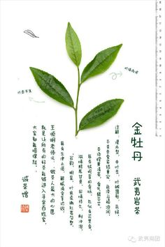 #金牡丹 #武夷岩茶 #wuyi #cliff #tea #jinmudan