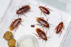At Arrow Exterminating #PestControlMelbourne prevent you from pests and we assure you to provide a better life with no pest hazard.