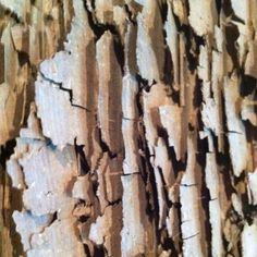 Termite damage. http://www.skylinepest.com/ http://www.arrowservices.com/