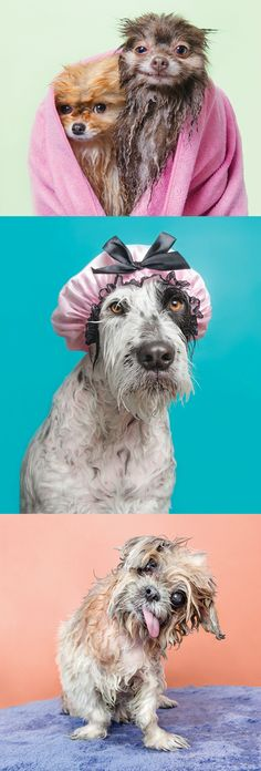 """Bath time may not be a pup's favorite activity, but if these comical """"Wet Dog""""' portraits are any indication, there may be a silver lining to this necessary evil."""