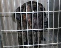 Pass Law that Bans Ownership of Dogs With Abuse History!  - The Petition Site