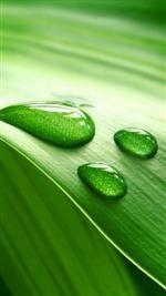Gotas de agua y hoja verde Fondos de pantalla para la galaxia S5