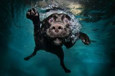 A dog who loves to dive underwater. Photo by: Seth Casteel #doglovers #dogphotography