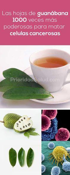 Las hojas de guanabana 1000 veces más poderosas para matar las células cancerosas.