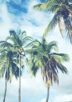 Palmeras en la arena #summer #sun #blue #hot #palm