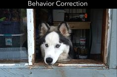 One step to solve this issue is to consult a get your dog indulged in behavioral classes for dogs Yucaipa and obedience training that can help you prevent or better control many of your dogs' behavior-related issues. Dog Training School, Best Dog Training, Behavioral Issues, Aggressive Dog, Separation Anxiety, Dog Behavior, Best Dogs, Dog Breeds, Your Dog
