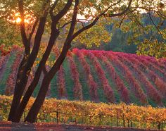 I shot this at Boeger winery in the fall of 2009.  One of my best overall fall pics.