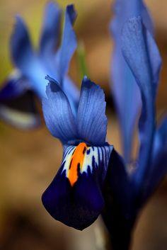 Iris ▓█▓▒░▒▓█▓▒░▒▓█▓▒░▒▓█▓ Gᴀʙʏ﹣Fᴇ́ᴇʀɪᴇ ﹕☞ http://www.alittlemarket.com/boutique/gaby_feerie-132444.html ══════════════════════ ♥ Bɪᴊᴏᴜx ᴀ̀ ᴛʜᴇ̀ᴍᴇs ☞ https://fr.pinterest.com/JeanfbJf/P00-les-bijoux-en-tableau/ ▓█▓▒░▒▓█▓▒░▒▓█▓▒░▒▓█▓