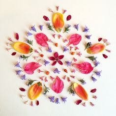 Bluebell Mandala by Bridget Beth Collins Flower Mandala, Mandala Art, Flower Art, Deco Nature, All Nature, Land Art, Art Floral, Flower Games, Language Of Flowers