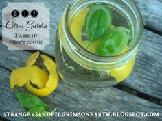 Strangers & Pilgrims on Earth: What to Make and Do with Citrus Fruits ~ The Citrus Series