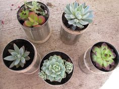 succulents in tin cans - cute take away gift...