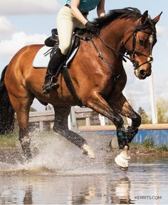 Being a good equestrian means that you listen to the horse and work with him.