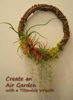 Create an Air Garden With a Tillandsia Wreath