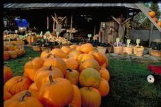 Roadside Farm Market with fresh fall produce - Northumberland County, Ontario Small Towns, Farmer, Ontario, Scenery, Canada, Tours, Fresh, Fall, Outdoor