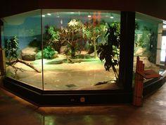 Komodo Kingdom at the Akron Zoo