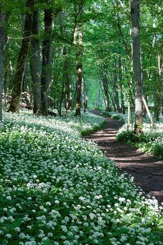 Springtime Pathway Through the Woods