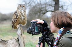 Bird photography tips: how to shoot pin-sharp pictures of birds of prey