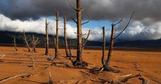 Tree trunks stand in the critically low Theewaterskloof Dam in Villiersdorp, South Africa, Jan. 23, 2018. As our natural World sends a clear message we are heading for disaster we MUST look to change our exploitative ways. For too long we have disregarded the Planet that sustains us - now we must collectively act to address sustainability or suffer the horrendous consequences. On a finite globe there is NO PLACE TO HIDE FROM REALITY!