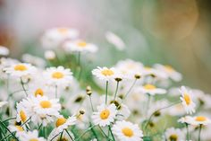https://flic.kr/p/s7erob | Flowers Bloom