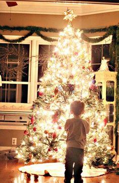 take glowing christmas tree photos #photography