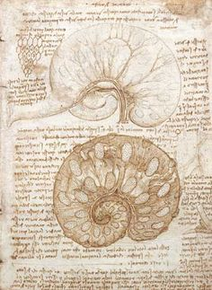 Page: Drawing of the uterus of a pregnant cow  Artist: Leonardo da Vinci  Completion Date: 1508  Place of Creation: Milan, Italy  Style: High Renaissance  Genre: sketch and study  Technique: ink  Material: paper